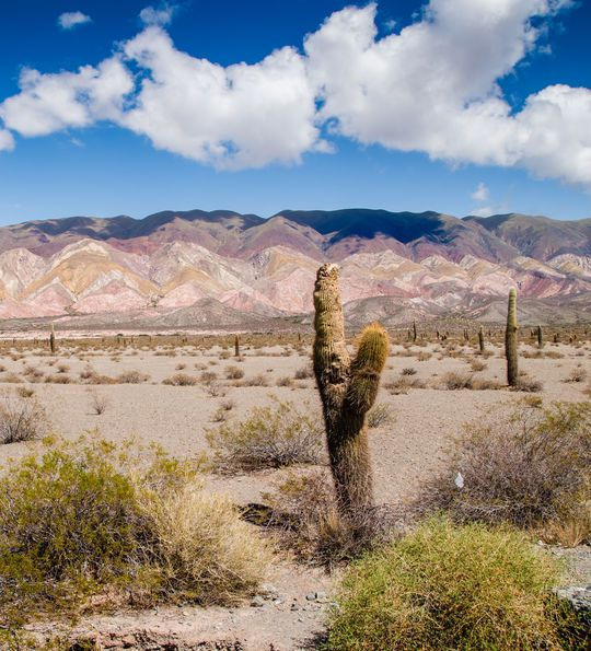 Los Cardones National Park, Salta Province in Argentina