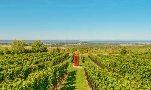 Luckett Vineyards, Nova Scotia