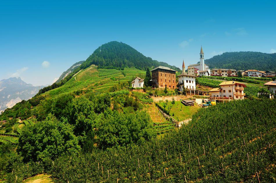 lutheran church and vineyard in the italian alps