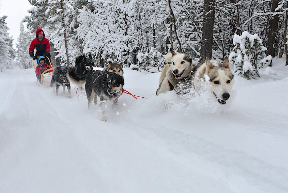 Husky Sledding Excursion, Lyngen Lodge