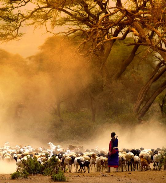 Maasai farmer, Tanzania