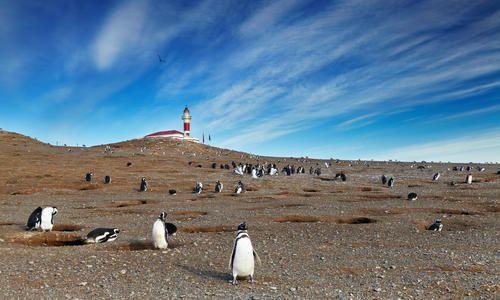 Magellanic penguins, Magdalena Island, off Punta Arenas
