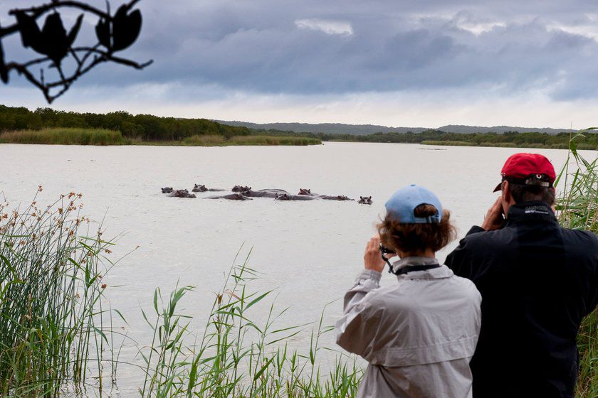Hippo Watching, Makakatana Bay Lodge, South Africa