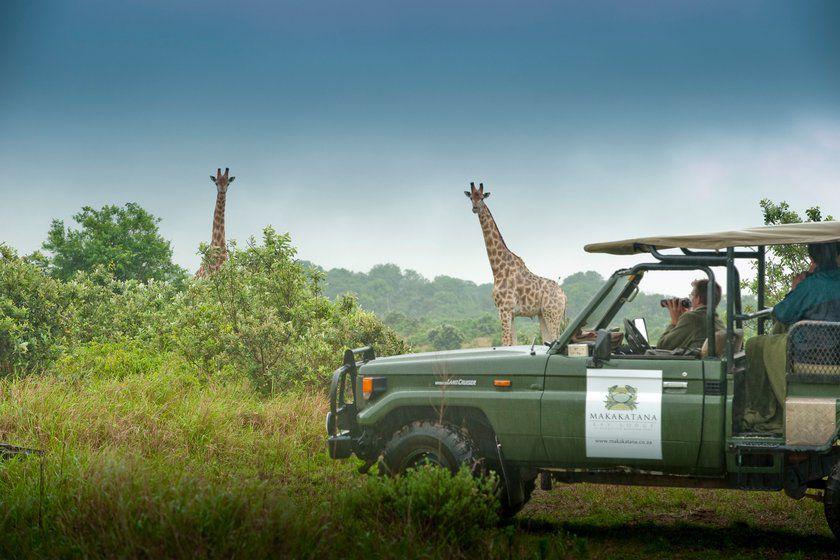 Giraffe Watching, Makakatana Bay Lodge, South Africa