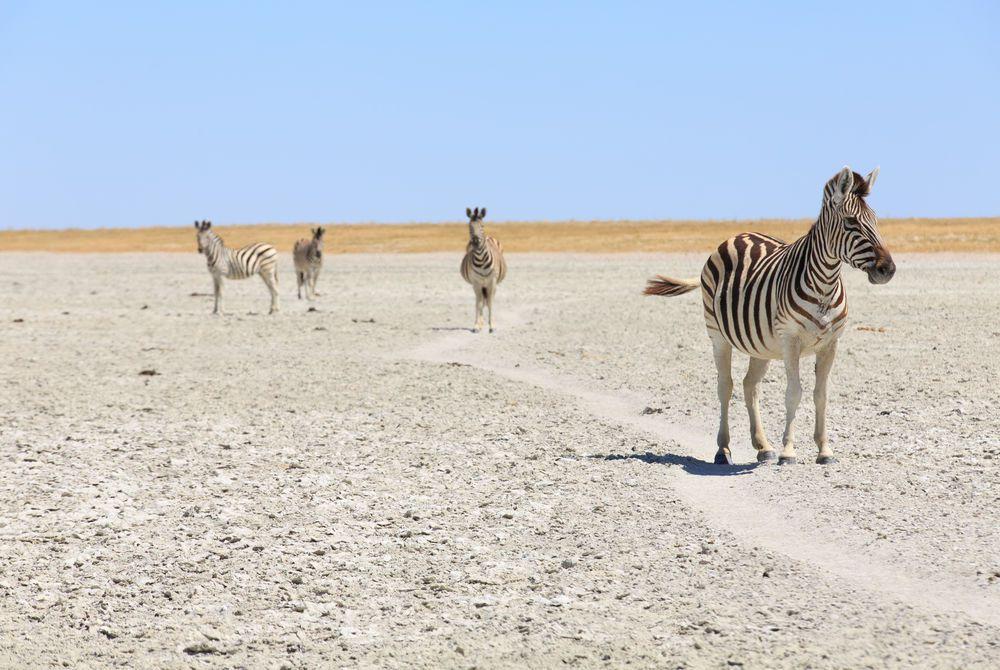 Makgadikgadi Pans National Park, Botswana
