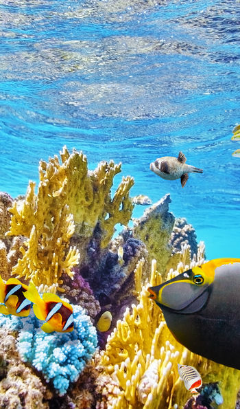Marine life, Great Barrier Reef
