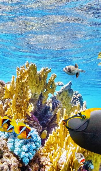 Marine life, Great Barrier Reef