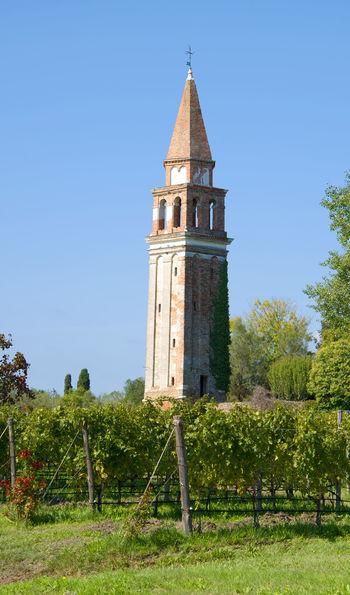 Mazzorbo vineyards, Italy