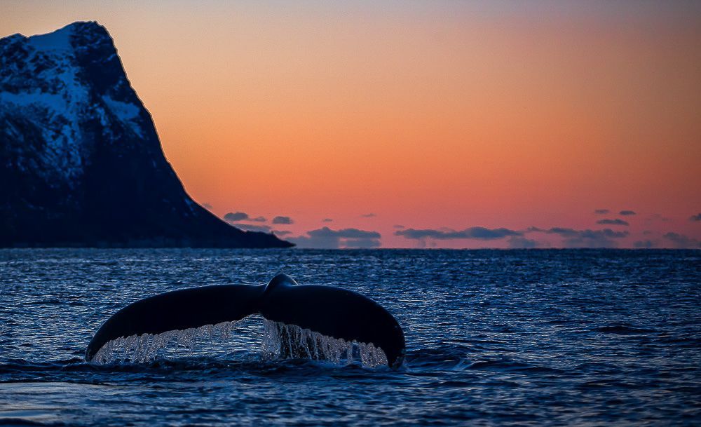 Northern Lights & Whale Watching on Senja