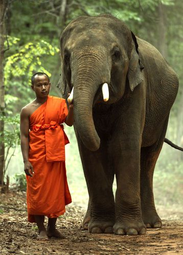 Monk with an elephant in Cambodia