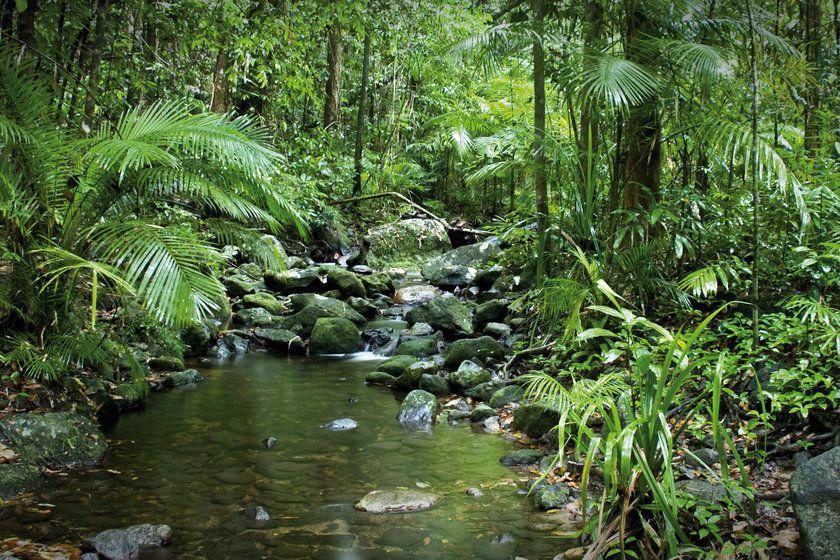 Mossman George River, Daintree Rainforest at Cape Tribulation, Queensland, Australia