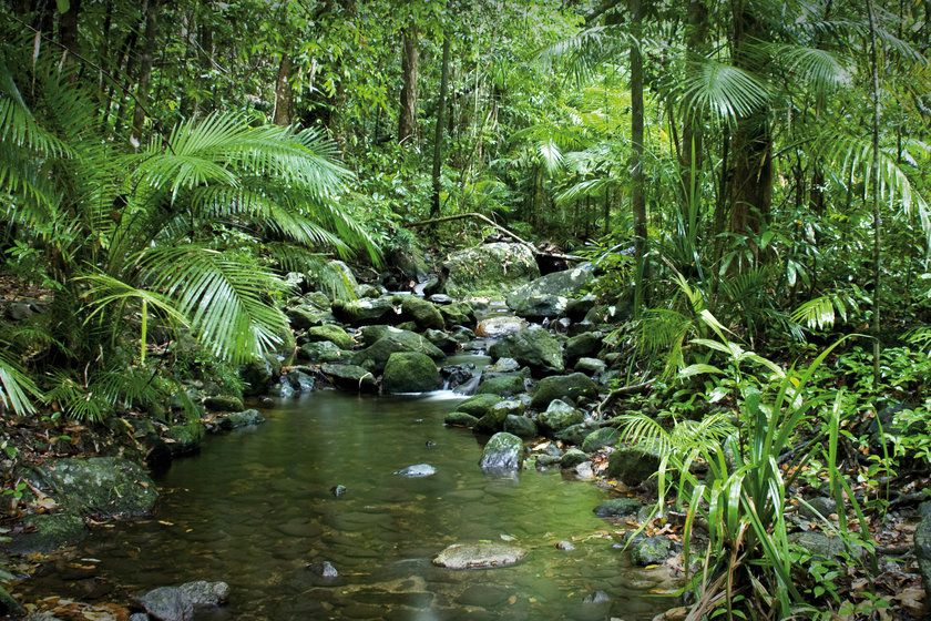 Mossman George River, Daintree Rainforest
