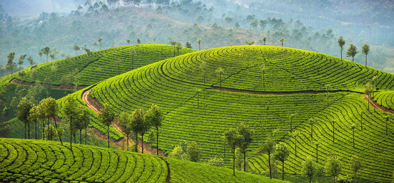 Keralan Spice Coast Holidays 2018 2019 The Luxury