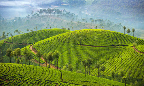 Munnar in Kerala, India