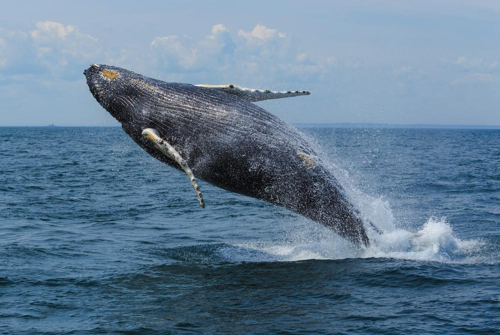 Whale Watching in Grand Manan of New Brunswick in Atlantic Canada