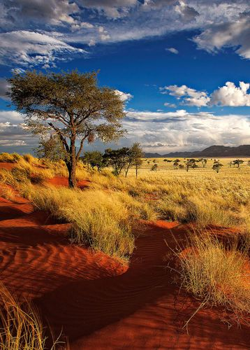 The red sands of a private reserve in Namibia