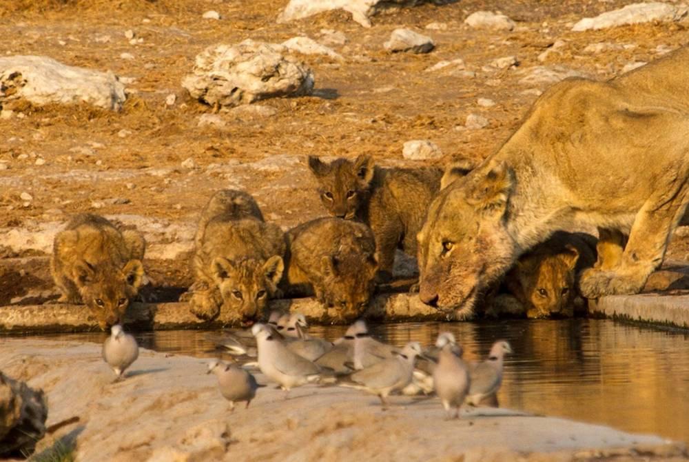 Namutoni Camp, Etosha National Park, Namibia