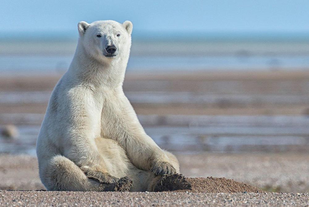 Nanuk Polar Bear Lodge, Manitoba