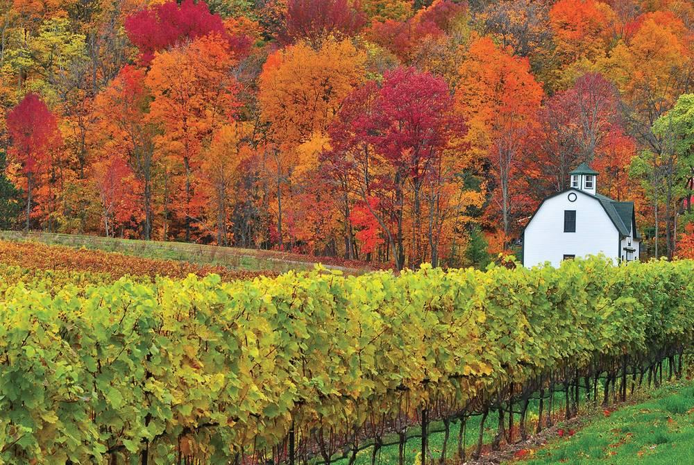 Vineyards, Niagara on the Lake