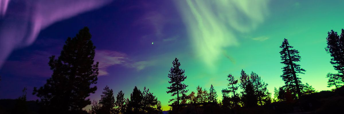 Northern Lights over trees, Canada