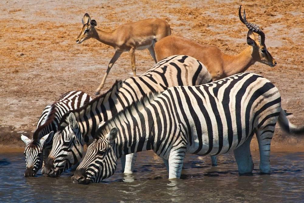 Okaukuejo Camp, Etosha National Park, Namibia