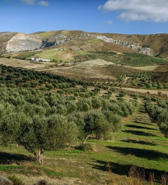 Olive oil farm, Crete