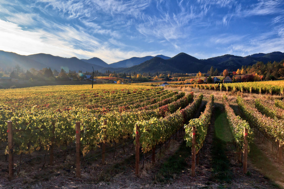 Oregon vineyards
