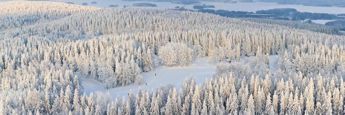 Panoramic aerial view of winter forest with frosty trees and skiers, Kuopio, Finland