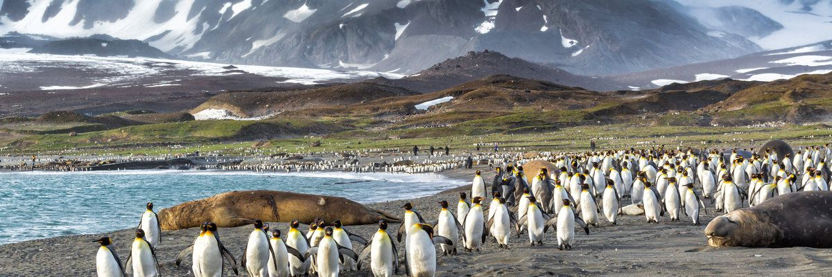 Penguin Colony, Falkland Islands, Argentina