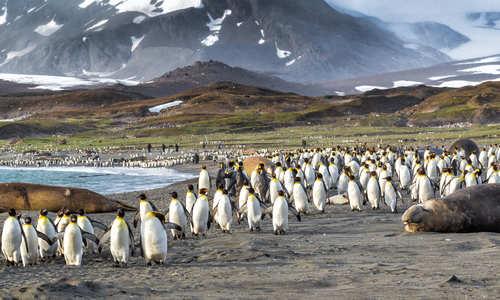 Penguin Colony, Falkland Islands