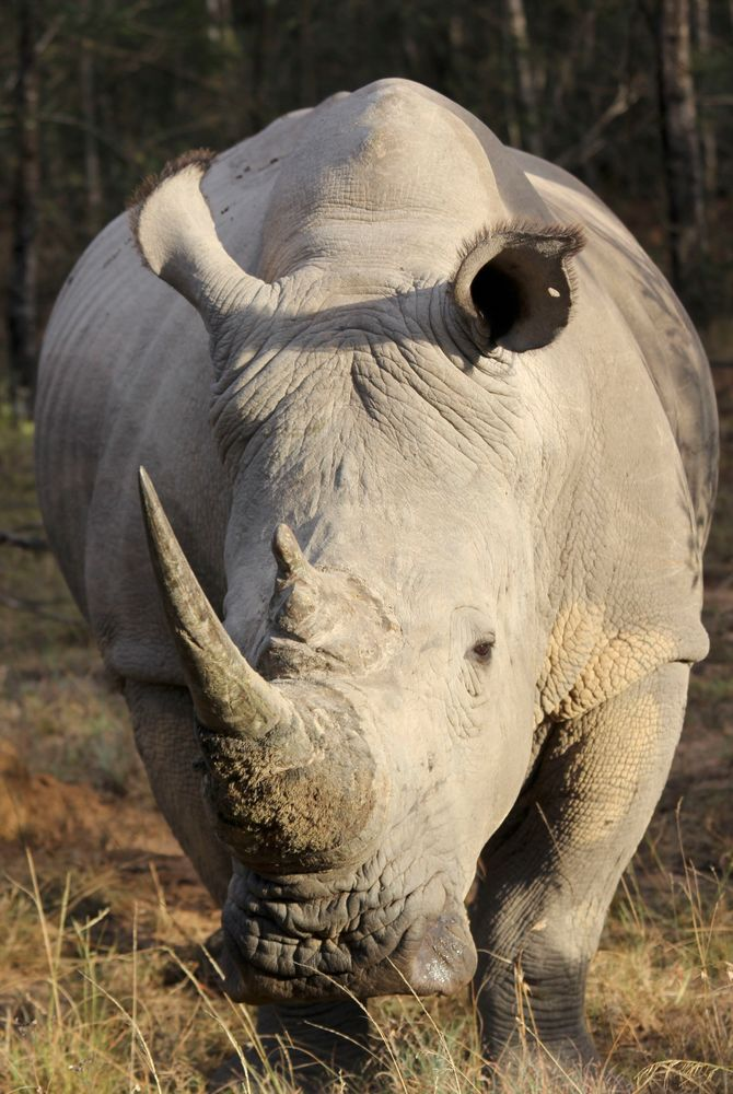 Photo by Bert of a rhino in Eastern Cape, South Africa