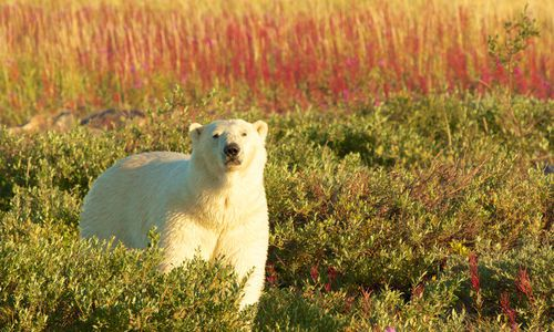 Northwest Territories, Nunavut & Arctic Canada