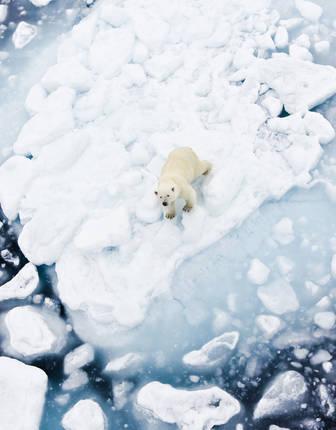 Polar Bear near Spitsbergen, Svalbard, Norway