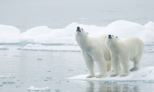 Top tips for visiting Svalbard