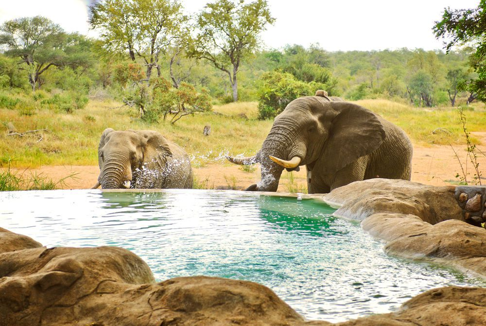 Pool, Motswari Game Lodge