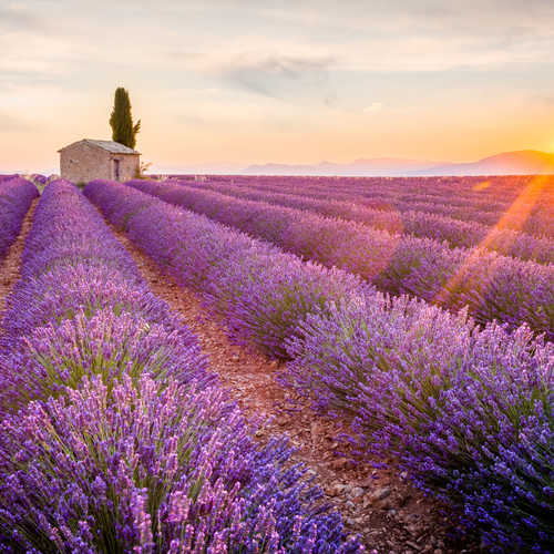 Explore the best of France
