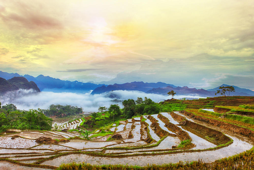 Rice terraces in Pu Luong Vietnam