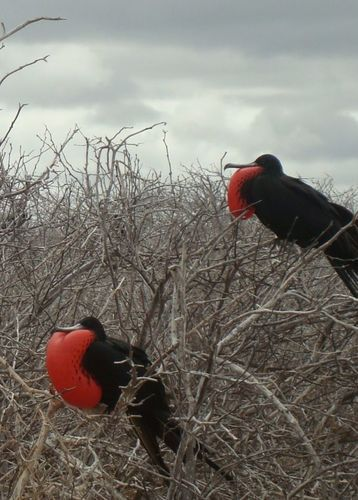 Rachel Mostyn's photography of birds in the Galapagos Islands, Ecuador