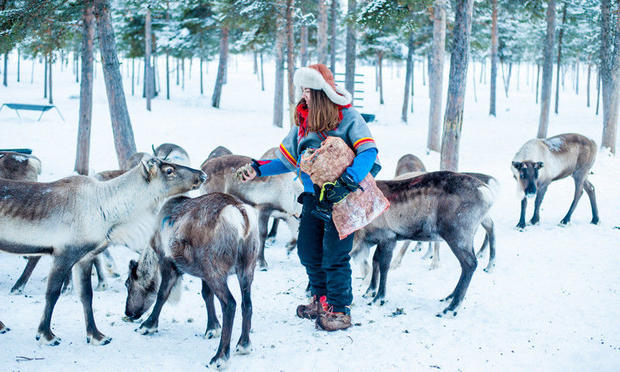 Meeting the reindeer near ICEHOTEL