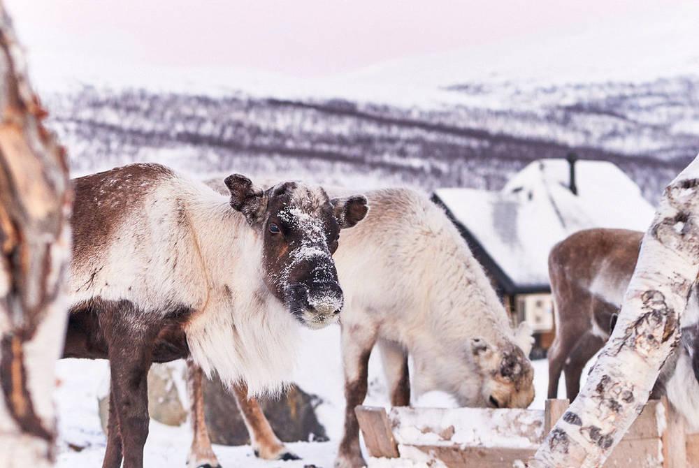 Reindeer Ranch, Kilpisjärvi