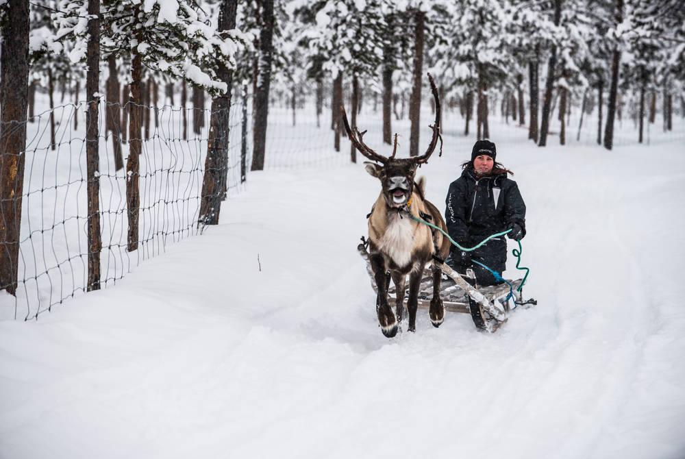 Reindeer safari excursion, ICEHOTEL (Credit: Markus Alatalo)