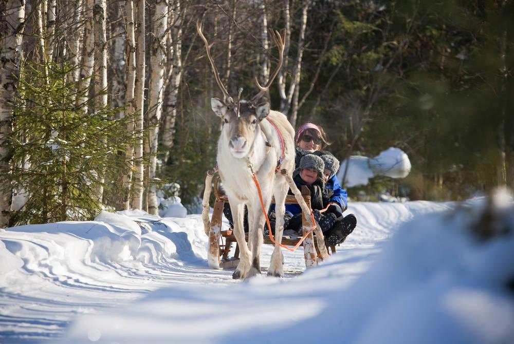 Reindeer sled ride, Rovaniemi