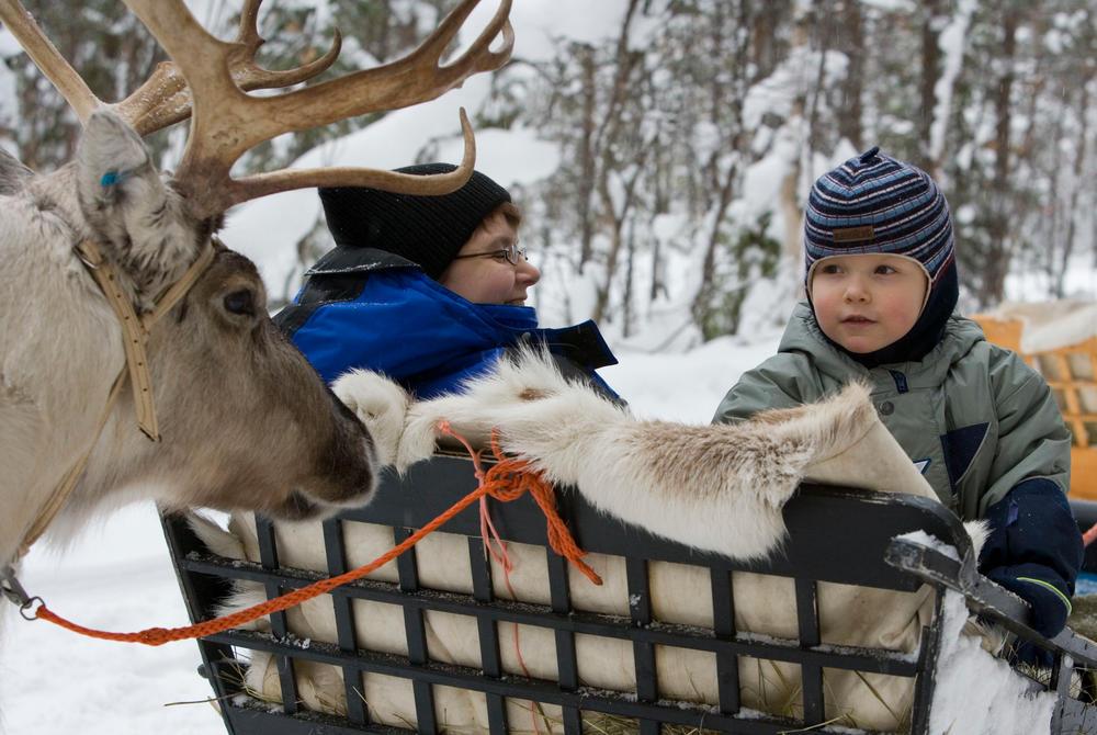 Reindeer sleighing at Rovaniemi (Credit: Visit Rovaniemi)
