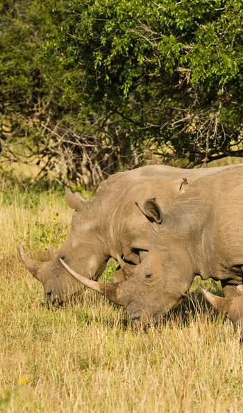 Rhino Ridge Lodge, KwaZulu-Natal