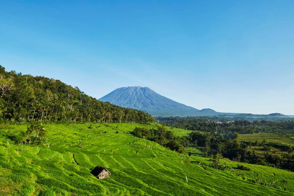 Rice fields and Mt Agung, Amankila