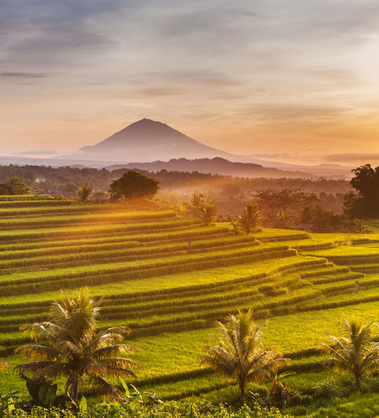 View of rice terrace in Bali with Mt. Batur volcano in the background