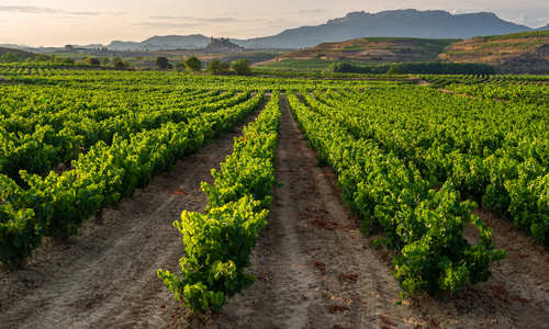 Rioja Wine Region Vineyard