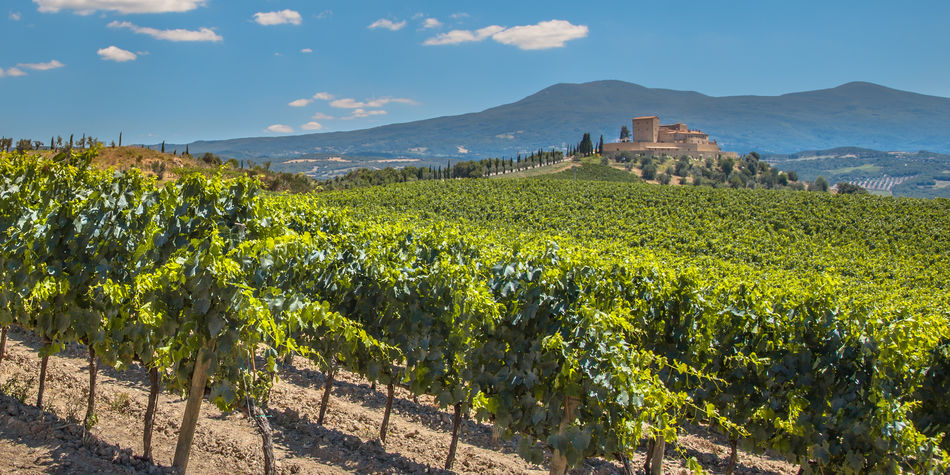 Wine vineyards of Rioja in Spain