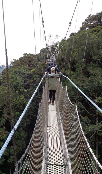 Canopy walkway, Nyungwe Forest National Park