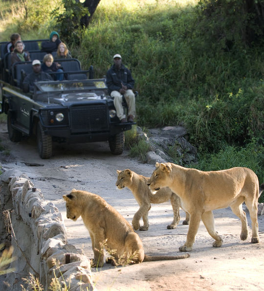 Safari at Lion Sands Game Reserve, South Africa